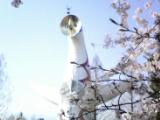 春ですね_1611~001◎.jpg